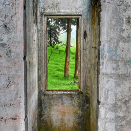 tree window green