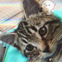 kittys freetoedit