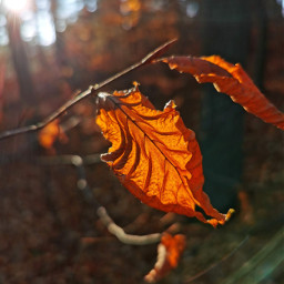autumn autumnvibes fall forest fallcolors woodland leaf sunlight sun beautifulnature beautifulday myphoto nofilters freetoedit