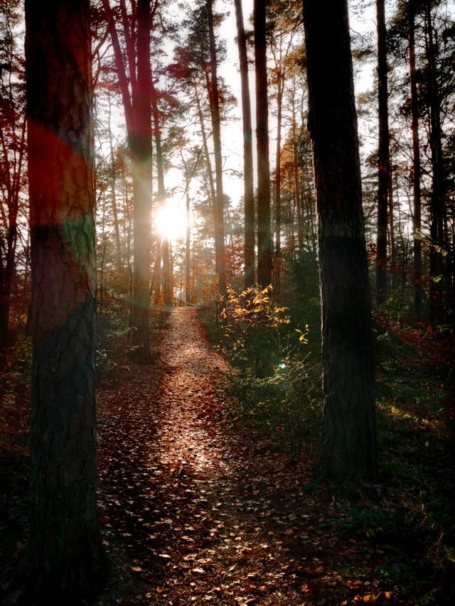 #autumn #autumnvibes #fall #forest #fallcolors #woodland #forestroad #trees #leaves #sunlight #sunnyday #sun #beautifulnature #beautifulday #myphoto #myclick