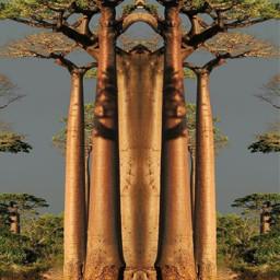 ccc picsart bäume nature freetoedit