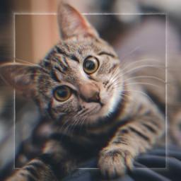 freetoedit cat photo mrlb2000 remix sweet pet awesome photography myart