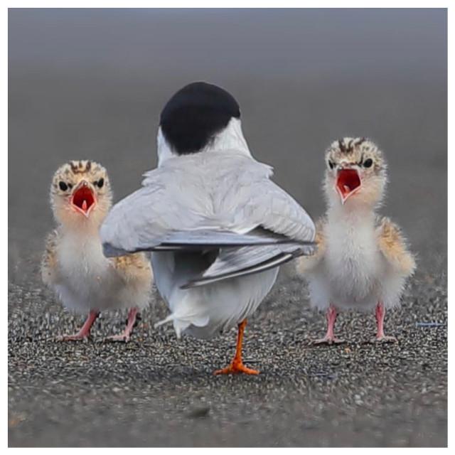 #ig_cameras_united #freetoedit #curatorlooking  #love #instagood #photooftheday #featuredartist #beautiful #happy #inspirethedayforyou #camera #photographer  #picoftheday #follow #vampikisses  #art #instadaily #nature #November #instagram #instagood #beauty #amazing #instamood #instahappy #photography #photo #igersjp