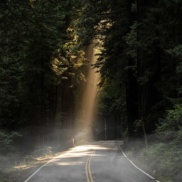 freetoedit ircgorgeousforest gorgeousforest