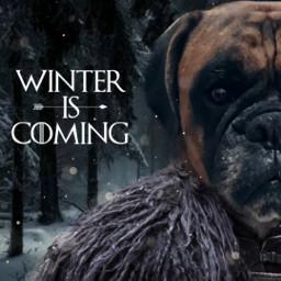 freetoedit winteriscoming mydog winter madewithpicsart