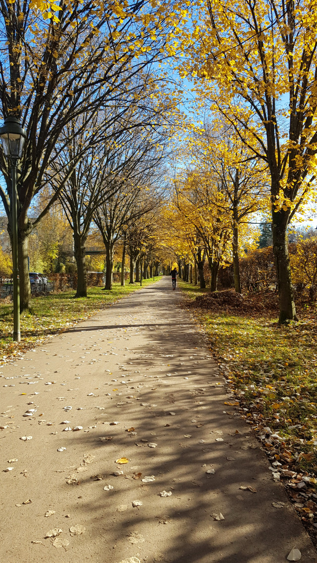 ☀️Today☀️🍁🍂 °• •° #freetoedit #autumn #afterworkwalk  #photography #nature #fall