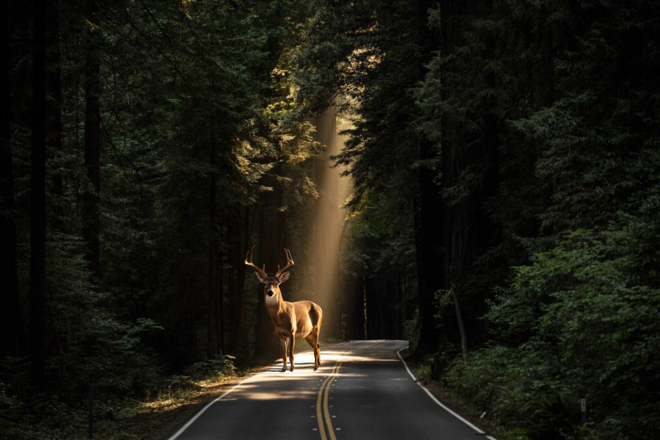 """""""Oh...What a beautiful creature"""" the photographer say...✨  #deer #deepinthewoods #forest #forests #light #lights #luce #foresta #cervo #animal #forestanimals #simple #simply"""