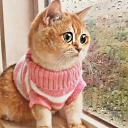 artistrecognition like repost cat freetoedit