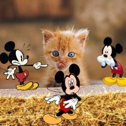 freetoedit cat gatto waltdisney mickeymouse topolino gatt photomontage fotocollage fotomontage photocollage collages collage