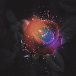 freetoedit picsart heypicsart madewithpicsart rose