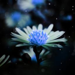 picsart editing editingchallenge flowers glow