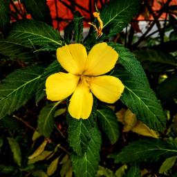 freetoedit flowerphotography yelllowflowers photography aditings spreadlove
