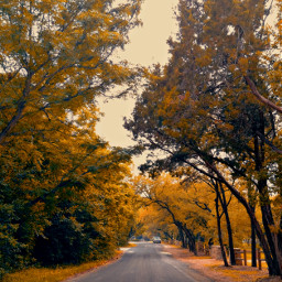 road trees treelover autumncolors autumnsbeauty