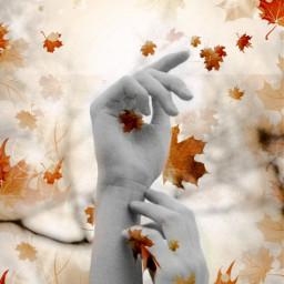 unsplash myart falling autumn hands picsarteffects picsartedits editsbyme freetoedit