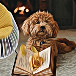book books bookshelf chair oilpaintingeffect hdreffect dog remixed puppy petsandanimals fireplace openbook reading cozy cute freetoedit