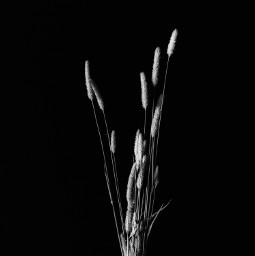 blackandwhite minimal blackandwhitephotography