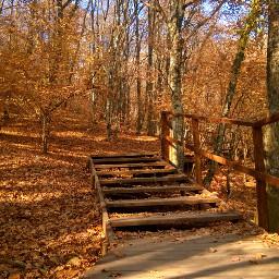 landscape naturephotography trees wood
