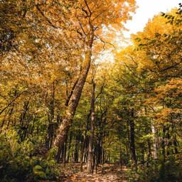 nature countryside wildvegetation autumnvibes trees freetoedit