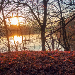 freetoedit lake forest boat tres nature sun