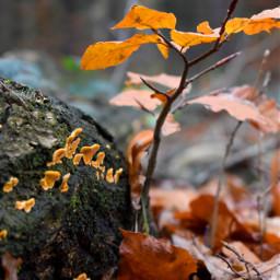 kinora autumn freetoedit