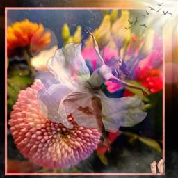 kinora myremix madewithpicsart picsart heypicsart ballet balerina dancing pink flower frame fog birds birdsflying sun sunshine freetoedit