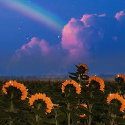 sky heaven sunflowerfield sunflowers rainbow clouds stars colorful glitter brilliant background amazing awesome beautiful sweet imagination fantasy madewithpicsart makeawesome papicks myedit remixit freetoedit unsplash
