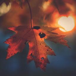 nature autumnvibes leaf autumnleaf warmsunnylight freetoedit