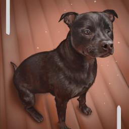 dog animal canine creature illustration drawing art digitalart digitaldrawing wacom digitalpainting