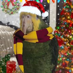 feliznavidad happychristmas freetoedit