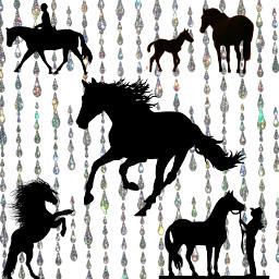 blackhorse cute pretty ponya rider freetoedit