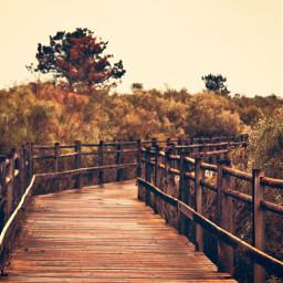 autumn rainydays cloudysky goldenlight autumnweather freetoedit