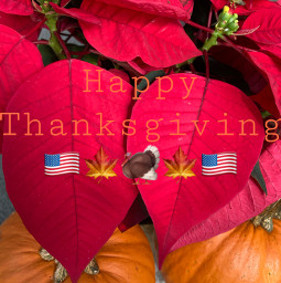 thanksgiving happythanksgiving turkey pumkin poinsettia red orange yellow brown