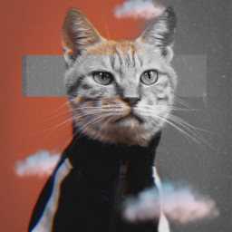 cat animal grng picsarteffects interesting photography freetoedit