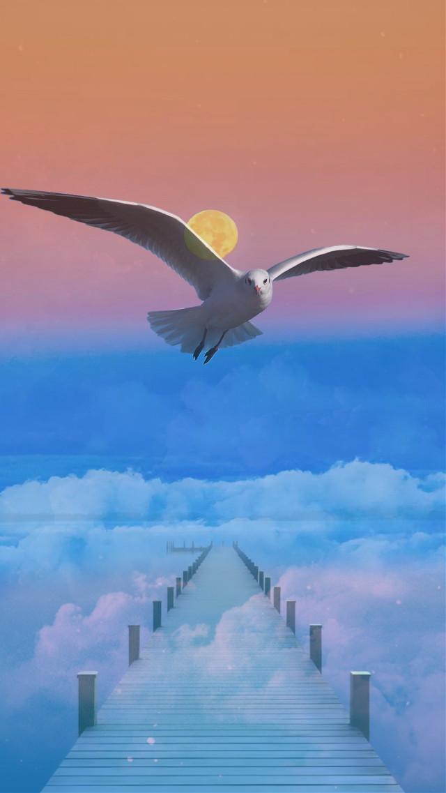 #sun #bird #sea