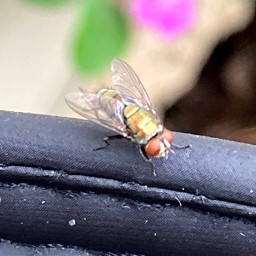 fly insect photography macro myphotography nature macrophotography naturephotography insectphotography closeupphotography