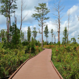 outdoors nature naturelover boardwalk adventure happy happiness myphoto swamp hike sunnyday naturephotography photography travel freetoedit