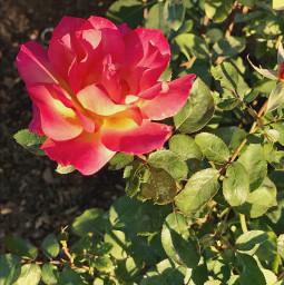 flower beautifulflower prettyflowers bush delicateflower leaves nature descansogardens scenerey