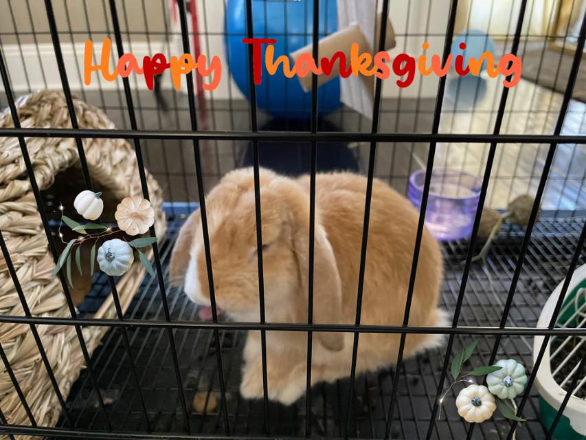 Lol Happy Late Thanksgiving #latepost  @toxic__halos  @-mango-cook  @frxnchella