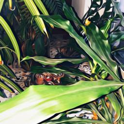 myphoto myedit piante mia manipolation oileffect