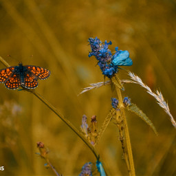 freetoedit followme macro macrophotography butterflies macroinsect insect insect_perfection bugs bugslife wildlife wildlifephotography flower flowers flowerslovers flowerstyles_gf nature naturephotography naturelovers natureshot nature_perfection nature_brilliance photography photooftheday myphotography