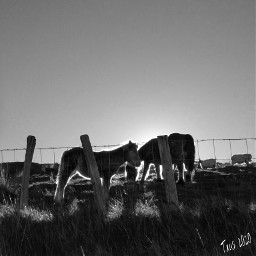 historiasdes_veladas_de_mi_dia_a_dia animal horse
