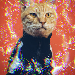 cat ice icecat glitch glitchy glitcheffect picsart heypicsart awesome nice freetoedit
