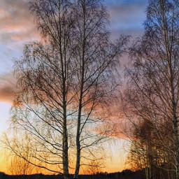 tree hdr landscape naturephotography colorful vividcolor