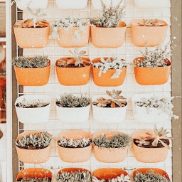 succulent aesthetic lightroompreset plants cute