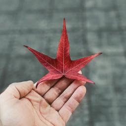 leave autumn hand nature
