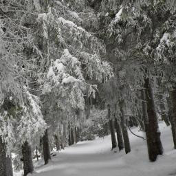 freetoedit snow winter blackforest photography nature