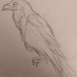 raven hashtag drawing freetoedit