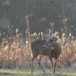 deer nature naturecore animals