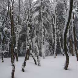 forest snow trees woodland winterwonderland frozen coldday coldwater myphoto myclick freetoedit