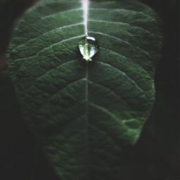 freetoedit leaf water drop waterdrop waterdropongreenleaf green nature naturephotography myphotography mypicture beautiful beautifulnature pcwateraroundme wateraroundme
